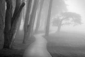 176_1trees_in_fog_study_9